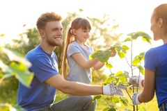 Little girl planting tree with volunteers. In park stock photo