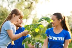 Little girl planting tree with volunteers. In park royalty free stock image