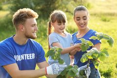 Little girl planting tree with volunteers. In park stock image