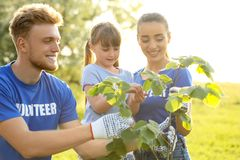Little girl planting tree with volunteers. In park stock images