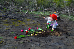 Little girl is planting tulips over burned ground Stock Photography