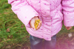Little girl Playing in Autumn Park Leaves Royalty Free Stock Photography