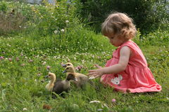 Little girl playing with baby ducks. Little girl playing with ducklings on grass stock images