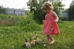 Little girl playing with baby ducks. Little girl playing with ducklings on grass royalty free stock image