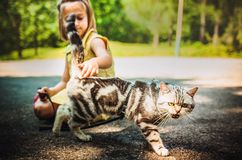 Little girl with a cat outdoors. Little girl playing with a cat outdoors Royalty Free Stock Photography