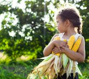 Little girl playing in a corn field on autumn. Child holding a cob of corn. Harvesting with kids. Autumn activities for children. Adorable Little girl playing in stock images