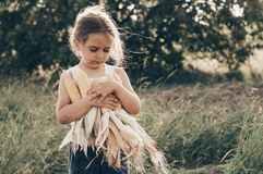 Little girl playing in a corn field on autumn. Child holding a cob of corn. Harvesting with kids. Autumn activities for children. Adorable Little girl playing in stock image