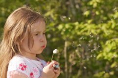 Girl and dandelion Stock Photography