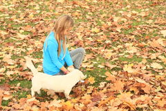 Little girl playing with a dog Stock Photo