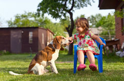 Little girl playing with a dog on the lawn . Stock Photo