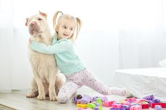 Little girl is playing with a dog in the room. The concept of li. Festyle, childhood, upbringing, family royalty free stock image