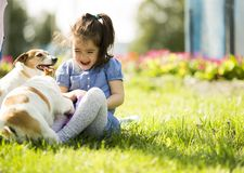 Little girl playing with dogs. At sunny day stock photos