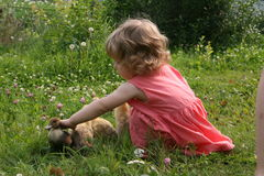 Little girl playing with ducklings. Little girl playing with baby ducks on grass royalty free stock image