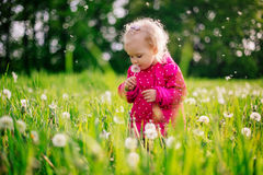 Little girl playing in a field of dandelions Royalty Free Stock Images