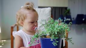 Little girl playing with a flower in a pot, examining flowers, studying plants, slow motion.  stock video