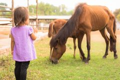A little girl playing with horses at a farm stock images