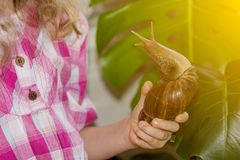 Little girl is playing with a huge snake of Achatine stock photography