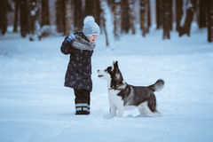 Little girl playing with husky royalty free stock image