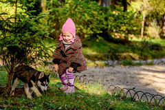 Little girl playing with husky puppy in the park Stock Photography