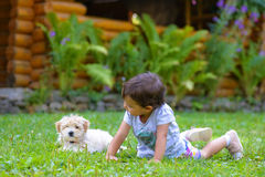 Little girl playing with a little puppy on grass Royalty Free Stock Image