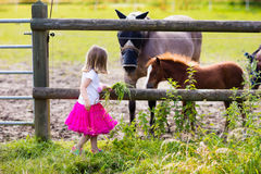 Little girl feeding baby horse on ranch. Little girl playing with mother and baby horses on sunny summer day in the country. Child feeding horse and foal pet stock image