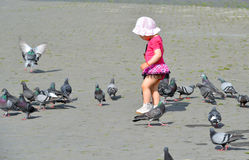 Little girl playing with pigeons Royalty Free Stock Image