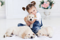 Little girl playing with Puppies Retriever Royalty Free Stock Photo