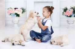 Little girl playing with Puppies Retriever Royalty Free Stock Photography