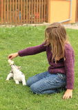 Little girl playing with a puppy. Kneeing little girl in violet pullover and blue pants playing with a brown and white puppy Stock Photography