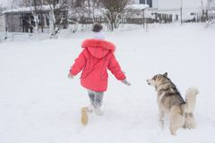 69a968fca4c Little girl playing with a Siberian husky breed dog in the winte royalty  free stock image