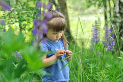 Little girl playing in sunny blooming forest. Toddler child picking lupine flowers. Kids play outdoors. Summer fun for family with. Little girl playing in sunny stock photo
