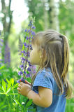 Little girl playing in sunny blooming forest. Toddler child picking lupine flowers. Kids play outdoors. Summer fun for family with Royalty Free Stock Images