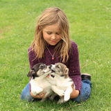 Little girl playing with two puppies. Smiling little girl in violet pullover and blue pants playing with two puppies Royalty Free Stock Images