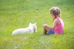 Little girl playing with white dog on the green grass Stock Images