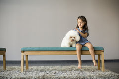 Little girl playing with white poodle. In the room stock image