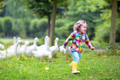 Little Girl Playing With Geese Stock Photos