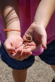 Little Girl Playing with Worm Stock Photos