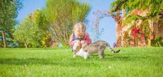 Little girl plays with a cat on a green grass Stock Image