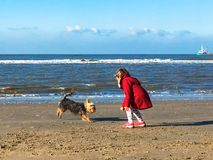 The little girl plays with dog on the beach. Royalty Free Stock Photo