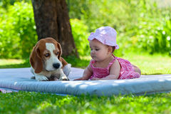 Little girl plays with dog Royalty Free Stock Photo