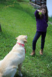 Little GIRL plays with her DOG. Cute young girl plays with a ball and her labrador dog stock photo