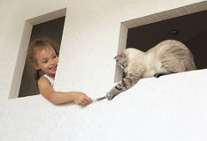 Little girl plays with cat. Stock Image