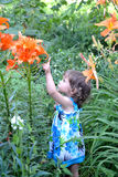 The little girl points a finger at garden lilies Royalty Free Stock Photos