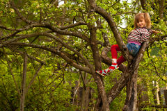 Little girl posing sitting on a tree Stock Photo