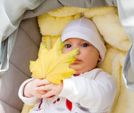Little girl in pram holding autumn leaf Royalty Free Stock Image