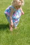 Little girl pulling dandelions in grass in summer royalty free stock images