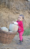 Little girl with a pumpkin. Little girl trying to round up a pumpkin stock image