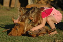Little girl with puppy. A blond caucasian white barefeet girl child in pink clothes playing together with her beautiful little Rhodesian Ridgeback hound dog Stock Images