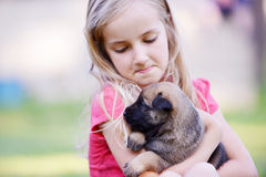 Little  girl with puppy. Little girl with puppy belgian shepherd malinois in  hands Stock Image
