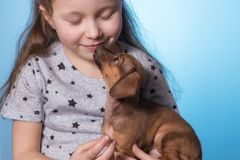 Little girl with a puppy dog in her arms. Close-up. Studio photo stock images